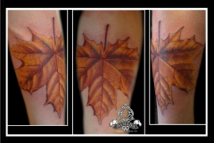 Realistic Leaf