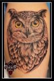 Owl-Realistic